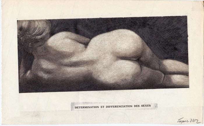 Stark untergewichtiger Pferdehintern, 2012, Bleistift Tusche Druck auf Papier, 14,5  x  26,3  cm